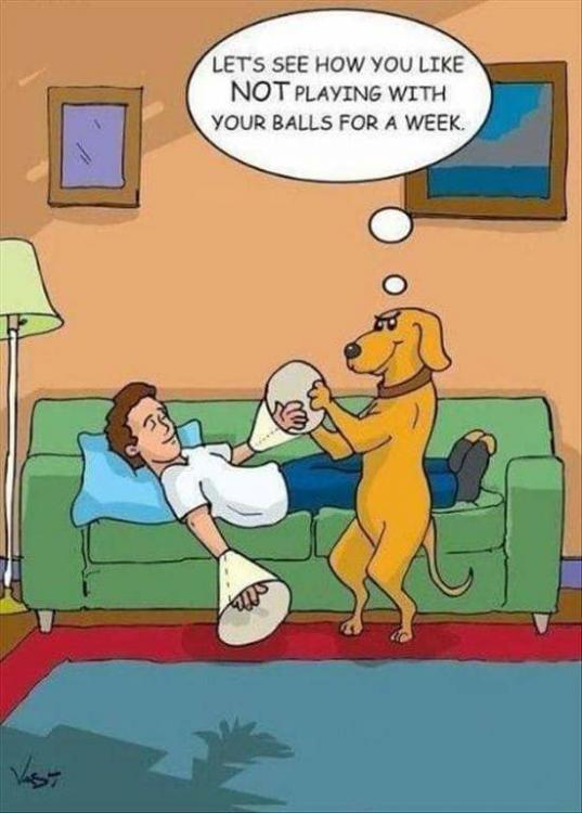 dog and balls.jpg